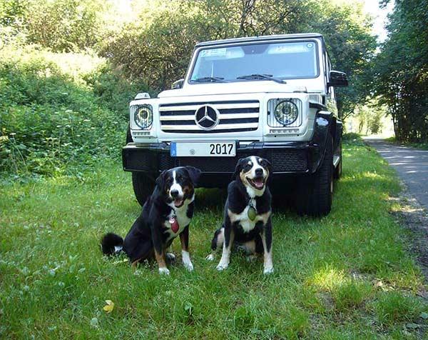 Dogs Adventure Tours