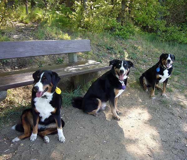 Hunde vor dem Start